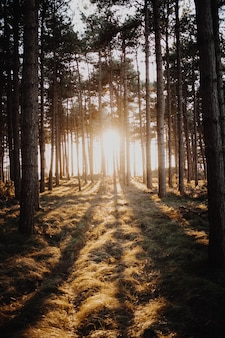 Vertikale aufnahme der sonne, die durch die bäume in einem wald scheint, der in domburg, niederlande gefangen genommen wird