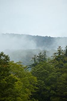 Vertikale aufnahme des grünen bergwaldes, der im nebel in vermont bedeckt ist