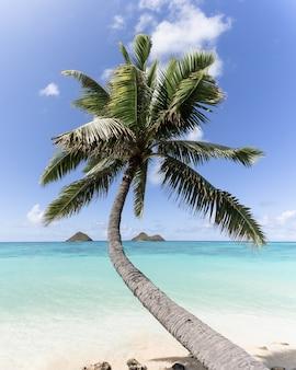 Vertikale aufnahme einer gebogenen palme am strand