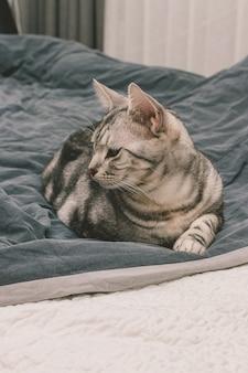 Vertikale aufnahme einer grau getigerten katze, die auf einem bett liegt