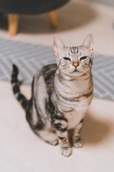 Vertikale aufnahme einer grau getigerten katze, die auf einer weißen oberfläche mit einem verschlafenen gesicht sitzt