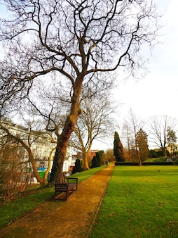 Vertikale aufnahme einer holzbank, umgeben von den bäumen des parks