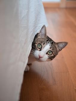 Vertikale aufnahme einer niedlichen katze mit einem überraschten gesichtsausdruck, der sich unter einer tischdecke versteckt