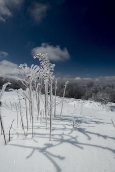 Vertikale aufnahme einer pflanze, die im winter mit schnee bedeckt ist