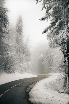 Vertikale aufnahme einer schönen leeren straße, umgeben von verschneitem wald