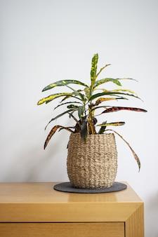 Vertikale aufnahme einer zimmerpflanze in einem gewebten blumentopf auf einem holztisch gegen eine weiße wand