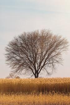 Vertikale aufnahme eines baumes in der mitte eines grasbedeckten feldes unter dem blauen himmel