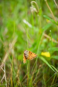 Vertikale aufnahme eines burnet-begleiters, der auf dem gras in einem feld unter sonnenlicht steht