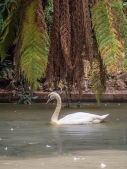 Vertikale aufnahme eines einsamen schwans im teich - das konzept der isolation, die neue normalität