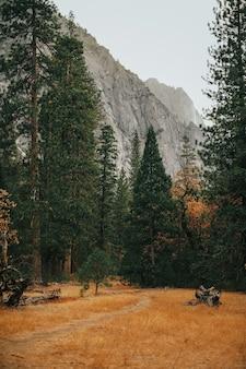 Vertikale aufnahme eines feldes mit hohen bäumen und einem felsigen berg