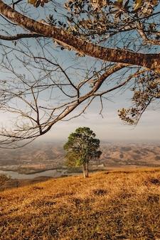 Vertikale aufnahme eines grünen baumes mit blick auf einen fluss und berge unter dem klaren himmel