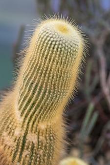 Vertikale aufnahme eines kaktus mit kleinen stacheln