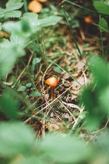 Vertikale aufnahme eines kleinen orangefarbenen pilzes, umgeben von gras und pflanzen in einem wald