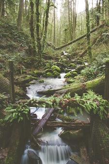 Vertikale aufnahme eines kleinen wasserfalls in einem dschungel mit bäumen, die mit moos bedeckt sind
