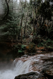 Vertikale aufnahme eines mächtigen wasserfalls im wald, umgeben von grünen bäumen