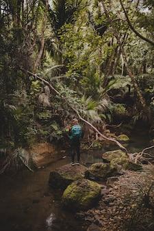Vertikale aufnahme eines mädchens auf den steinen des waldes nahe den kitekite falls, neuseeland