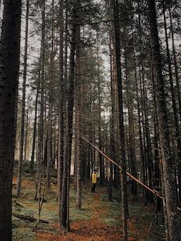 Vertikale aufnahme eines mannes, der durch einen wald mit hohen bäumen geht