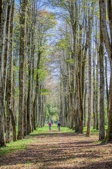 Vertikale aufnahme eines mannes und einer frau, die ein fahrrad im park mit hohen bäumen reiten