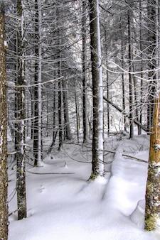 Vertikale aufnahme eines mit schnee bedeckten waldes im winter