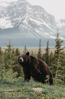 Vertikale aufnahme eines niedlichen bären, der in einem wald hängt, der durch berge umgeben ist