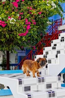 Vertikale aufnahme eines niedlichen flauschigen hundes mit einem verärgerten gesicht nahe der treppe