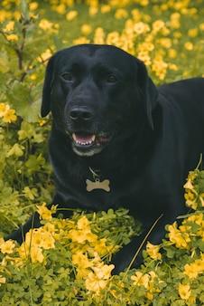 Vertikale aufnahme eines niedlichen hundes, der auf dem boden nahe gelben blumen liegt