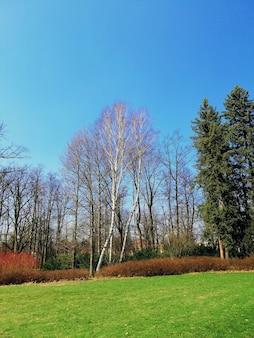 Vertikale aufnahme eines parks voll von gras und bäumen während des tages in jelenia góra, polen.