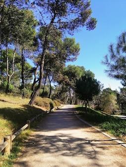 Vertikale aufnahme eines pfades im park quinta de los molinos, madrid, spanien