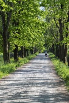 Vertikale aufnahme eines radfahrers, der auf einer schmalen straße fährt, die von grünen bäumen gesäumt ist