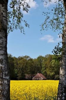 Vertikale aufnahme eines schönen hauses in einem feld, das mit blumen und bäumen in den niederlanden bedeckt ist