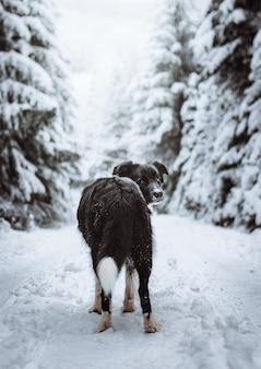 Vertikale aufnahme eines schwarzen border collies in einem schneebedeckten wald