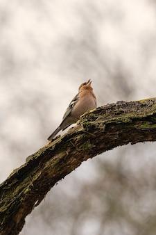 Vertikale aufnahme eines vogels, der auf einem zweig sitzt