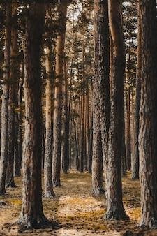 Vertikale aufnahme eines waldes, der mit hohen kahlen bäumen bedeckt ist