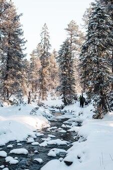 Vertikale aufnahme eines waldes mit hohen bäumen im winter