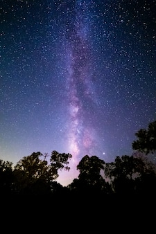 Vertikale aufnahme eines waldes unter einem schönen sternenklaren nachthimmel - ideal für tapeten