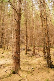 Vertikale aufnahme eines waldes voller kahler bäume im herbst