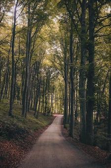 Vertikale aufnahme eines waldweges, umgeben von grünen hohen bäumen