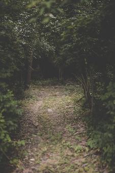 Vertikale aufnahme eines weges in der mitte eines waldes mit grünblättrigen bäumen