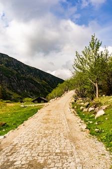 Vertikale aufnahme eines weges umgeben von bäumen mit den bergen im hintergrund