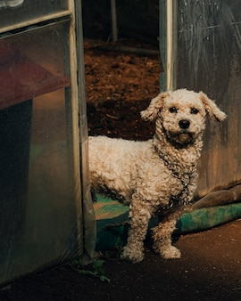 Vertikale aufnahme eines weißen hundes in südkorea, der am eingang eines gewächshauses steht
