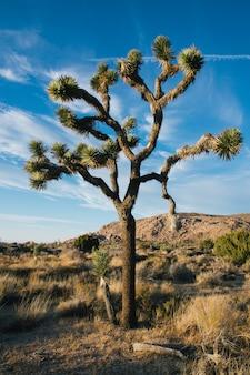 Vertikale aufnahme eines wüstenbaums in einem trockenen feld mit blauem bewölktem himmel