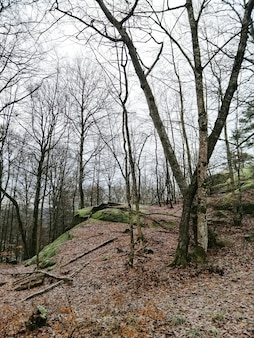 Vertikale aufnahme von bäumen in der mitte des waldes in larvik, norwegen