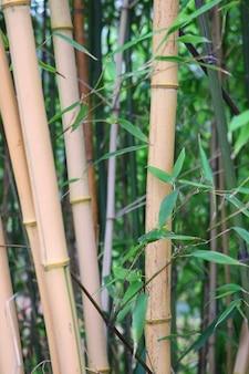 Vertikale aufnahme von bambusbäumen, umgeben von grünen blättern