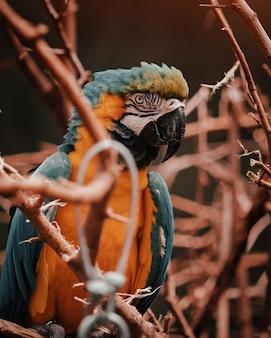 Vertikale aufnahme von buntem orange und einem blauen exotischen tropischen papagei, der auf einem ast eines baumes thront