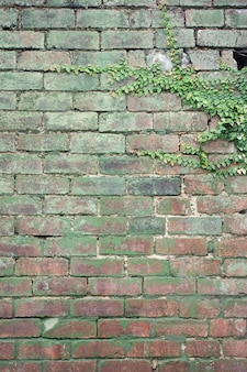 Vertikale aufnahme von grünen pflanzen, die auf einer alten rostigen kopfsteinpflasterwand wachsen