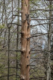 Vertikale aufnahme von kahlen bäumen in einem wald bei tageslicht