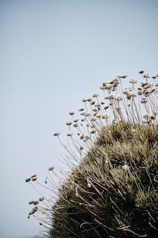 Vertikale aufnahme von pflanzen, die auf dem felsen mit einem blauen himmel im hintergrund zur tageszeit wachsen