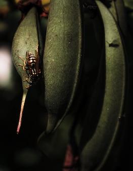 Vertikale aufnahme von pflanzenblättern mit darauf sitzenden insekten