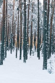 Vertikale aufnahme von schönen hohen bäumen in einem wald auf einem schneebedeckten feld