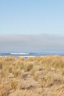 Vertikale aufnahme von strandgras am morgen am cannon beach, oregon